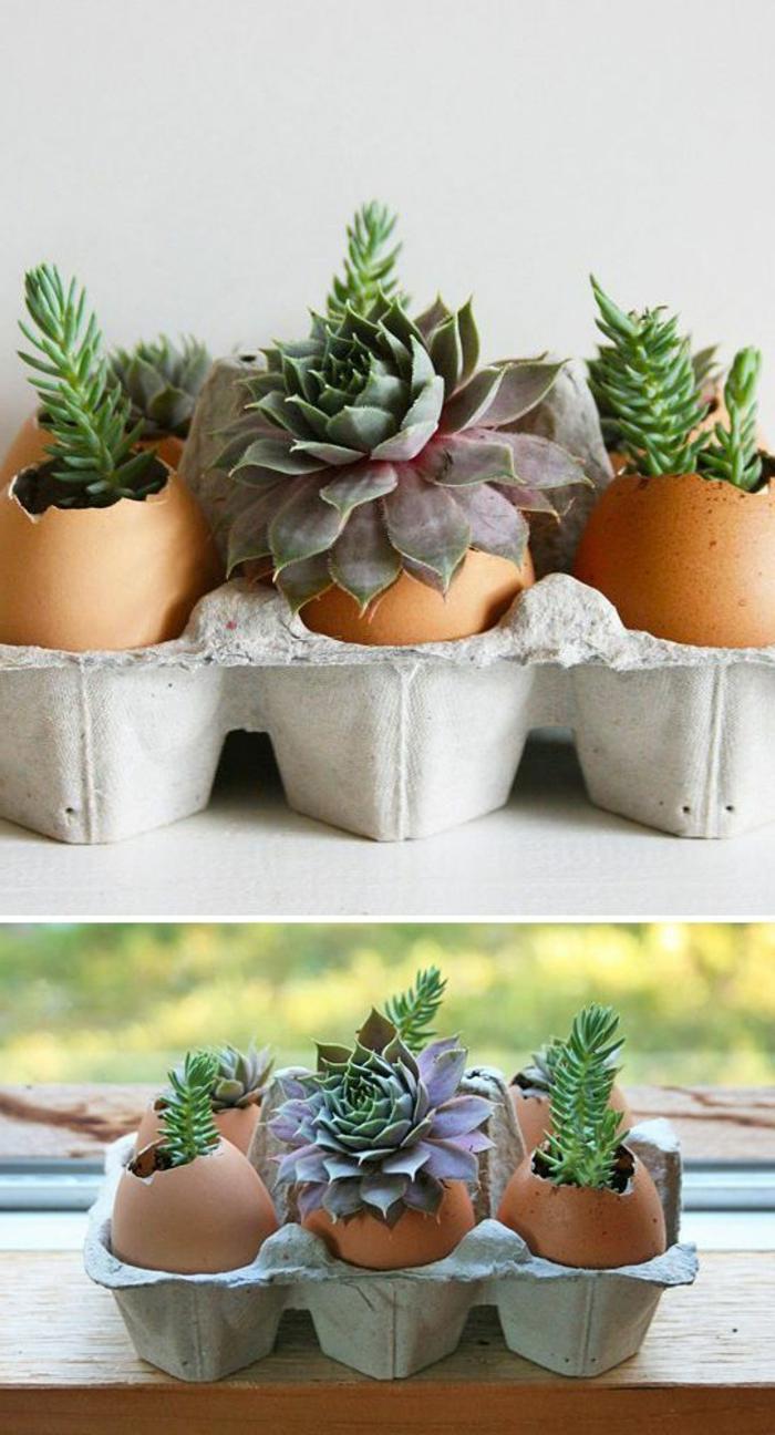 terrarium plantes, petit germoir abritant des succulents, idée comment créer une decoration printaniere, activité manuelle printemps