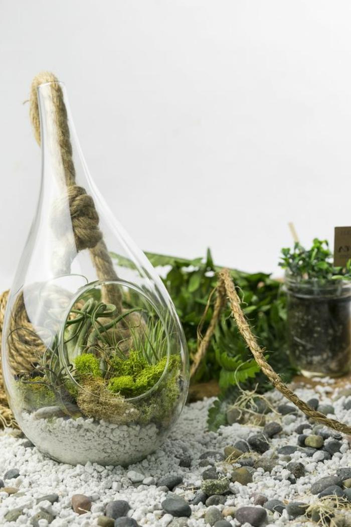 terrarium plante, récipient en verre, cailloux décoratifs, sable blanc, plante bocal