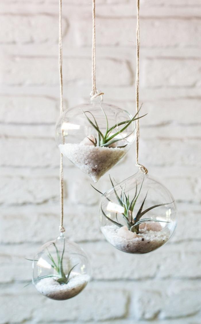 terrarium plante, murs en briques blanchis, air plant, sable blanc, cailloux décoratifs
