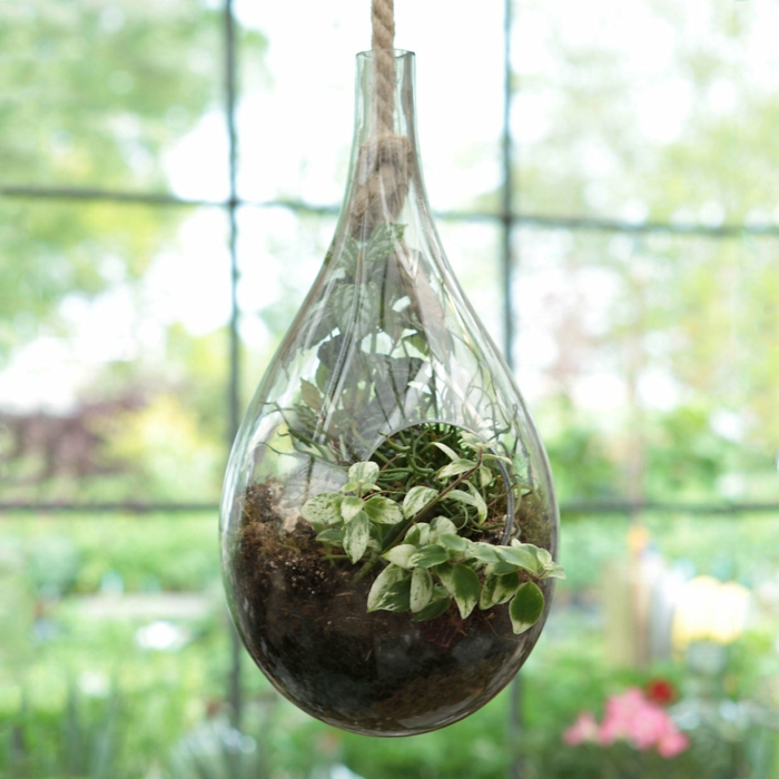 faire un terrarium, plantes vertes, terreau, corde longue, grande fenêtre, jardin miniature