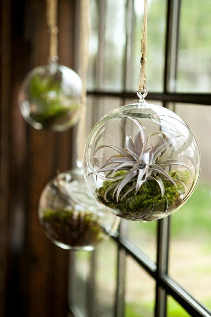 plante en bocal fermé, grande fenêtre, vue sur le jardin, terrarium végétal