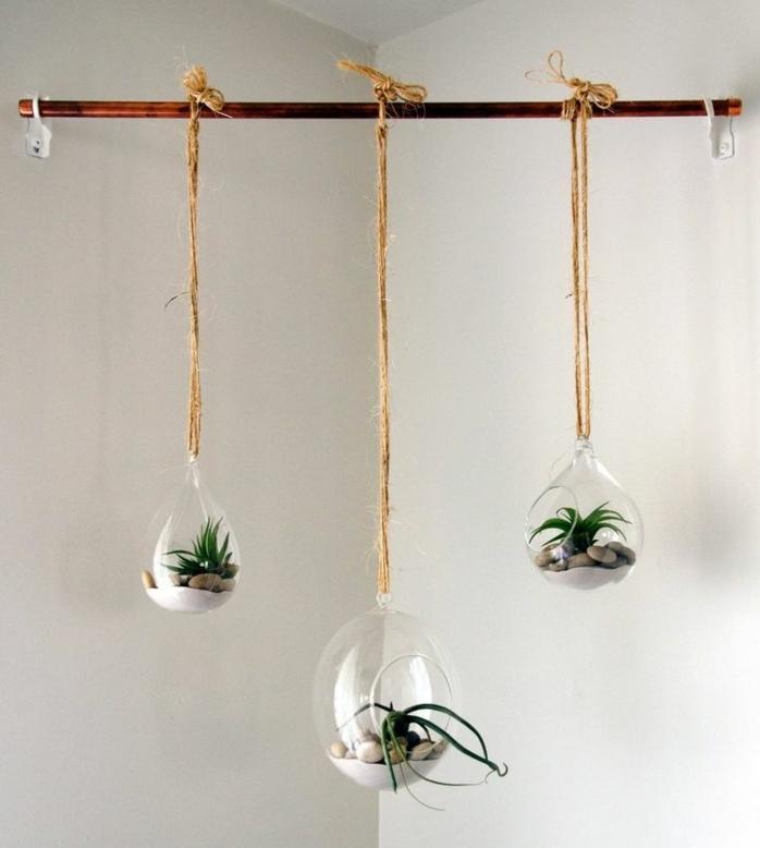 terrarium plante, branchette, corde longue, murs blancs, terrarium suspendu