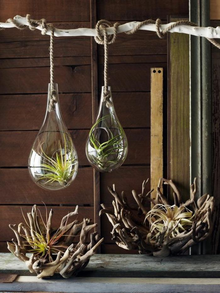 terrarium plante, murs en bois, branchette, corde longue, terrarium succulente, récipient en verre