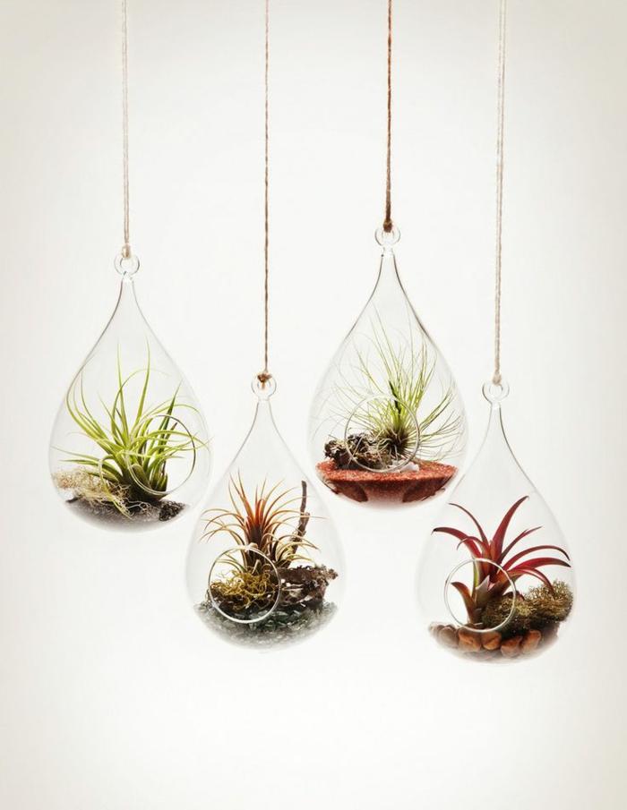 terrarium végétal, murs blancs, air plants, terreau, sable rouge, cailloux décoratifs