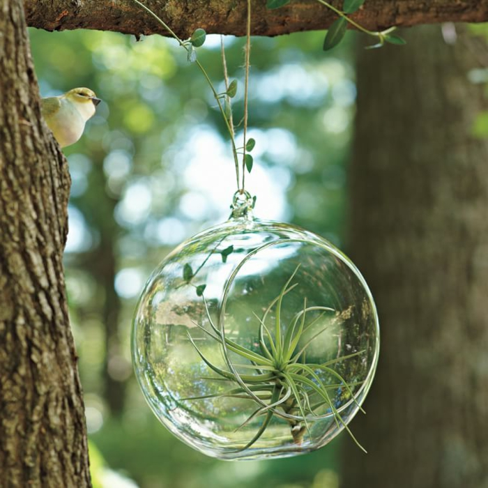 boule en verre à suspendre, diy décoration pour le jardin, terrarium succulente