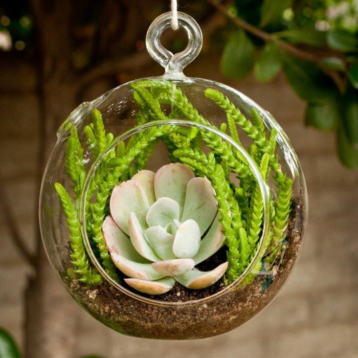 faire un terrarium, boule en verre à suspendre, plantes vertes, terreau, murs en briques