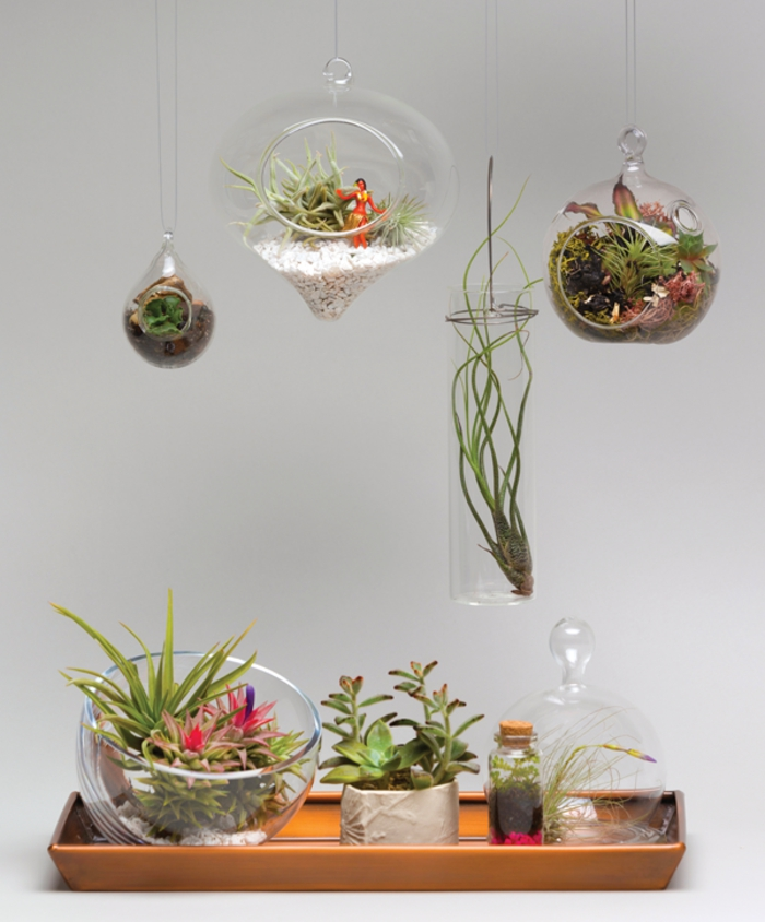 jardin miniature, plantes vertes, récipient en verre, terrarium suspendu