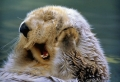 Les plus heureux animaux mignons – 70 images qui vont vous donner du sourire