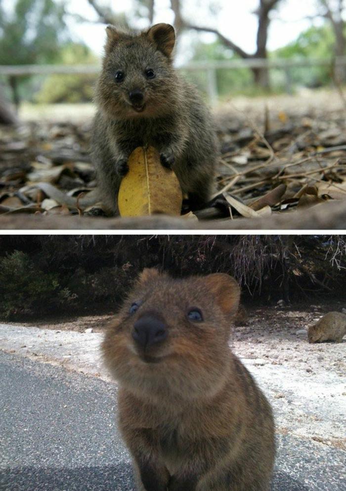 Image d animaux trop mignon adorables animaux sourire