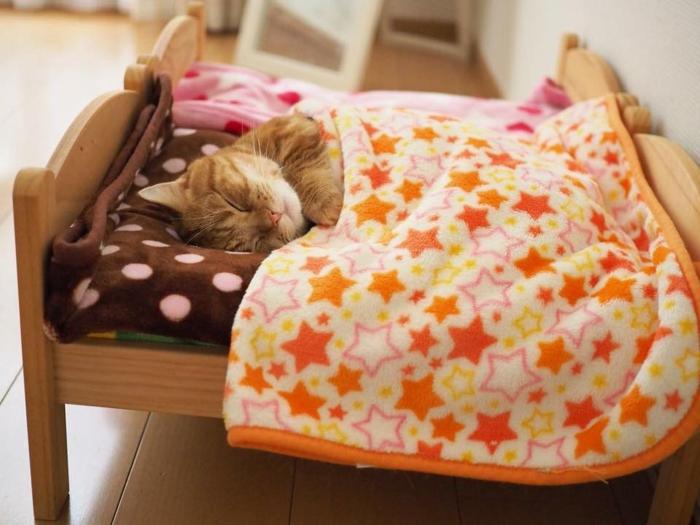 L animal le plus mignon du monde bébé animaux trop mignon chaton dans lit