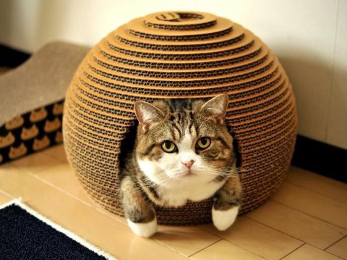 cabane a chat, niche de chat en carton en forme d'igloo et chat mignon
