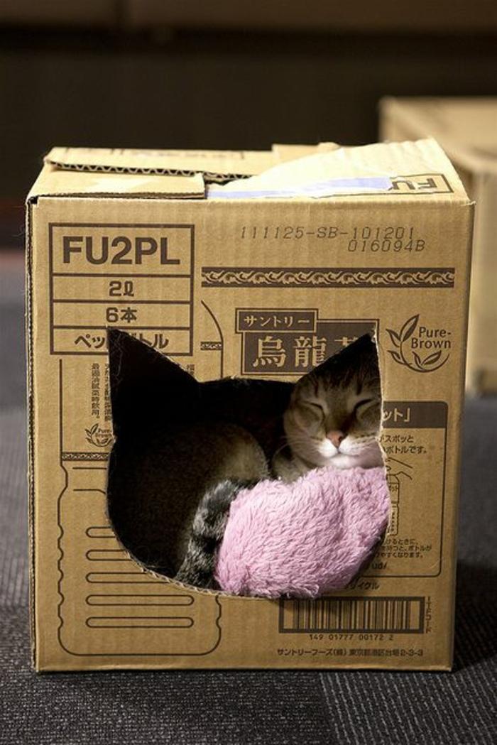 cabane a chat faite avec une caisse de carton et un chat dormant