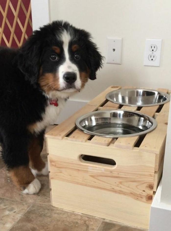 cagette en bois, projet pour réaliser un coin repas pour votre chien, idée de recyclage caisses en bois, animal de compagnie