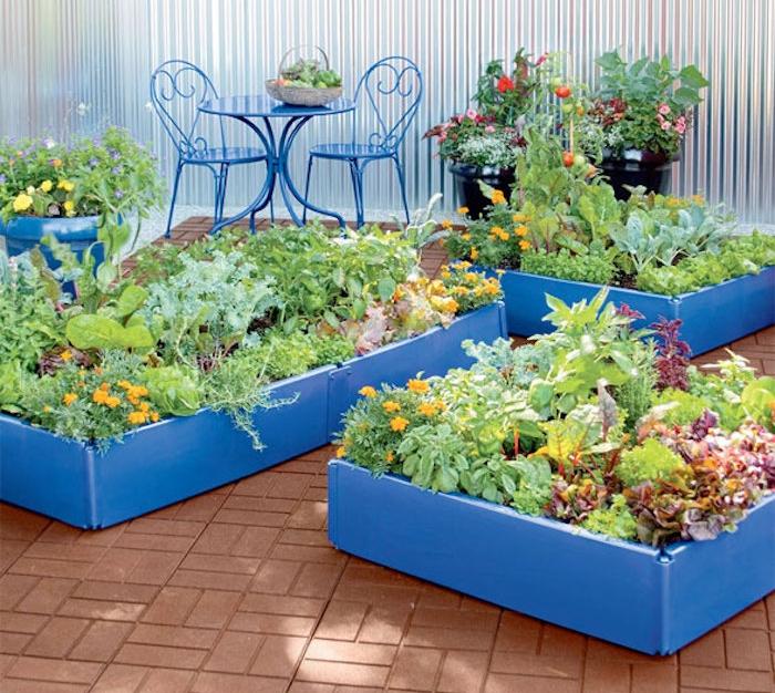 bac jardin bois que planter dans un carré potager bleu