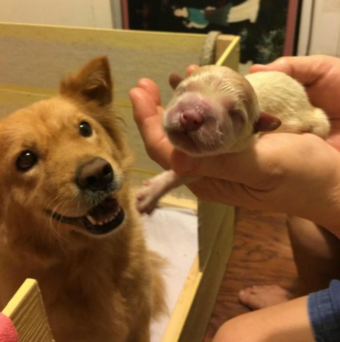 Petit animal mignon animaux les plus mignons chien bébé