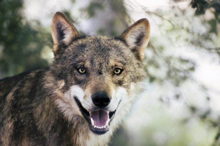 Petit animal mignon animaux les plus mignons loup beau
