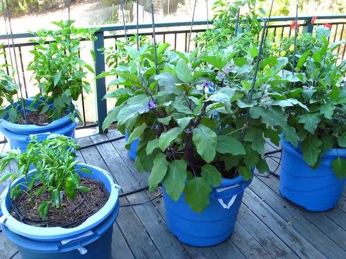 jardin hors sol bac en plastique bleu pour balcon