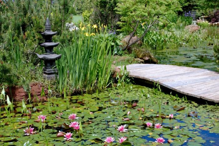 jardin zen japonais, pont en bois, broussailles vertes, nénuphars, bassin d'eau, arbres verts
