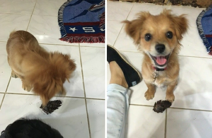 Superbe fond d écran d animaux trop mignon chien sourire