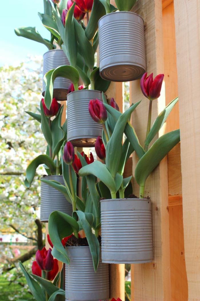 recup jardin, clôture en bois, arbres blancs, boîtes de conserve diy, tulipes rouges
