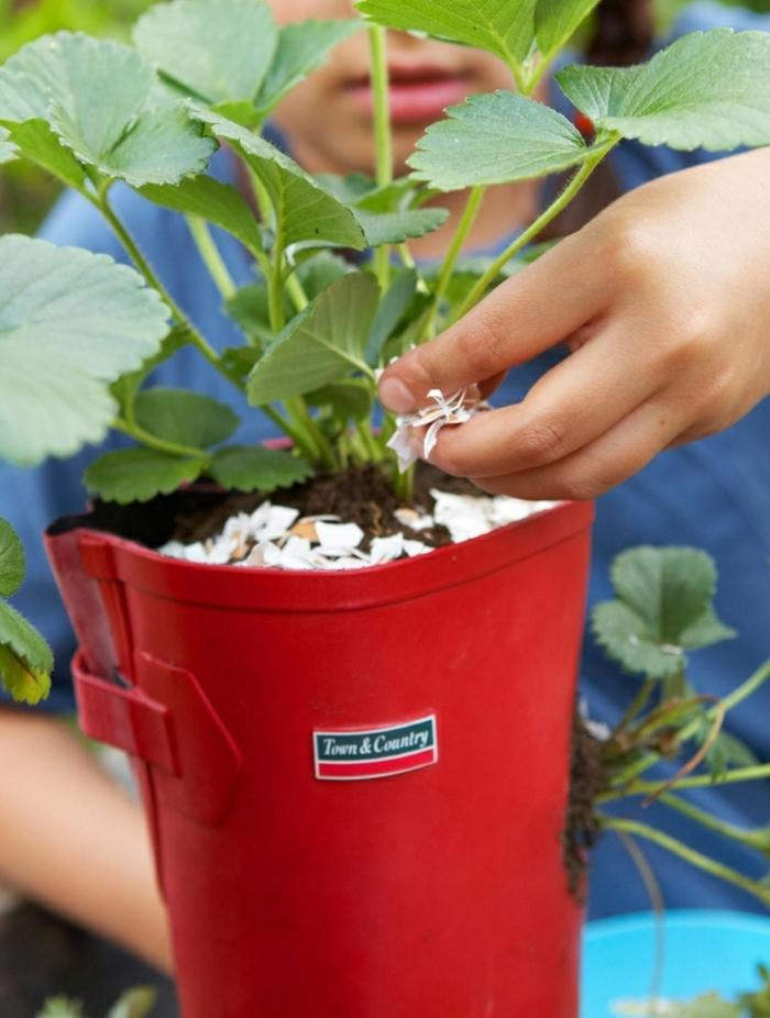 decoration de jardin a faire soi meme, plants fraise, coquille d'œufs, t-shirt bleu, botte rouge