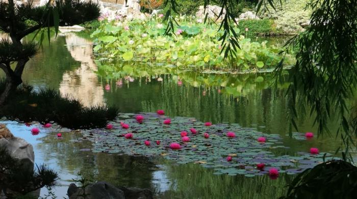 déco de jardin zen, bassin d'eau, broussailles vertes, rochers dans l'eau, jardin zen