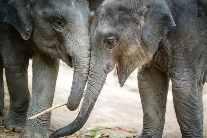 Les animaux les plus mignons photo animaux trop mignon éléphant
