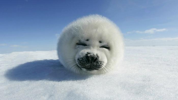 Image d animaux trop mignon adorables animaux heureux