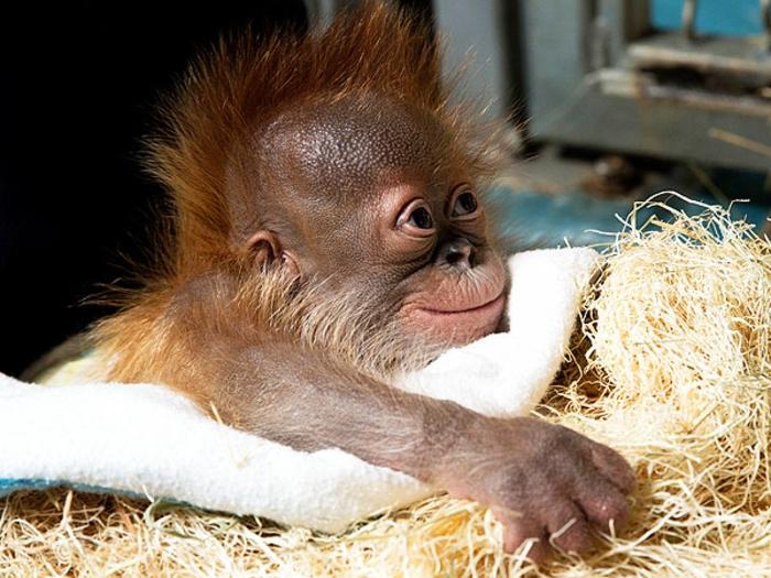 Animaux heureux animaux mignons animal gorille bébé