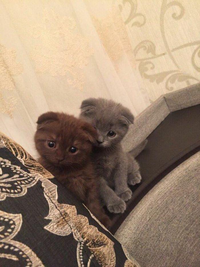 Beaux animaux mignon photo adorable chatons bébés