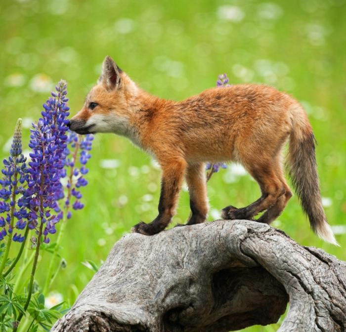 Petit animal mignon animaux les plus mignons renard