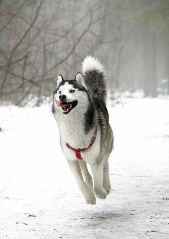 Une photo animaux mignon photos d animaux mignons courir