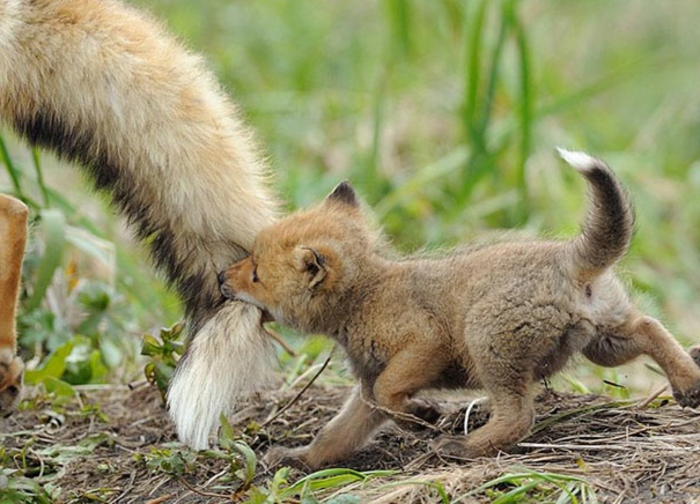 Bébé animaux mignon animal trop mignon renard bébé
