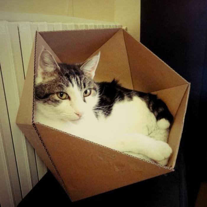 maison de chat en carton, petite niche de chat en carton