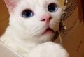 La maison de chat en carton en plusieurs photos inspirantes