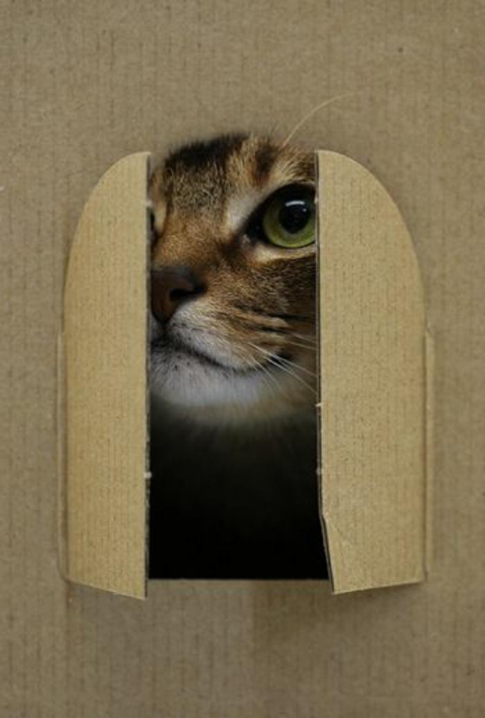 maison pour chat en carton, grande caisse de carton transformée en maisonette
