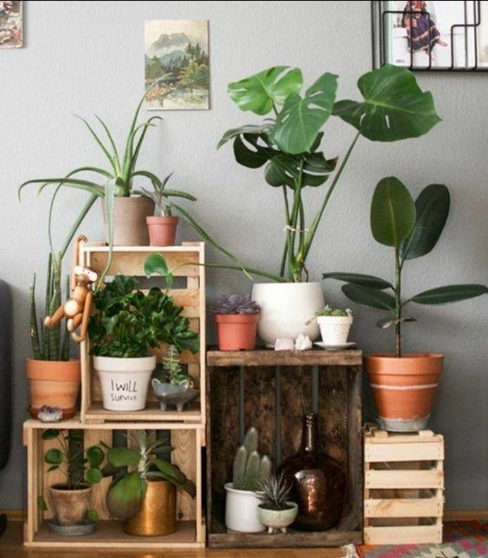meuble en cagette, etagere rangement fleurs, jardniniere interieure, pots de fleurs et plantes vertes, tapis multicolore, mur couleur grise