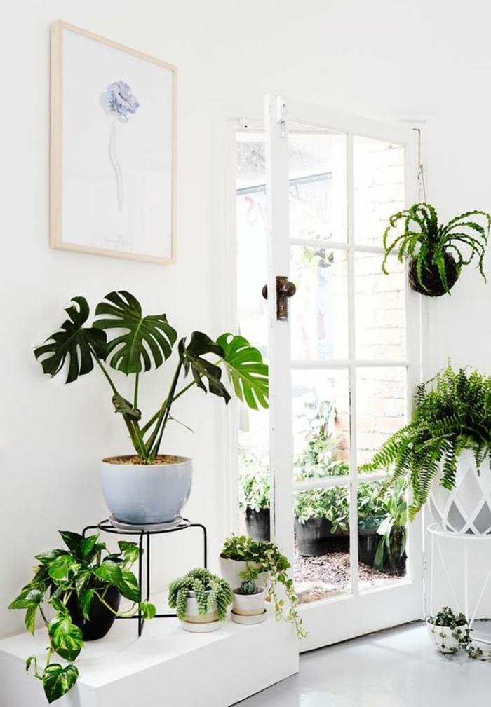 porte plante dans un décor bien vert intérieur richement orné de plantes