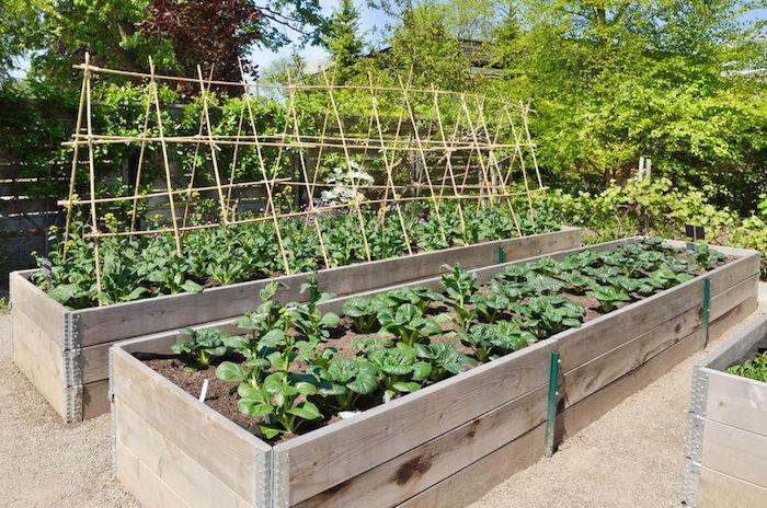 bac jardin bois pour potager rectangulaire hors sol