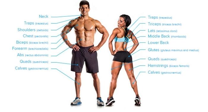 regime sportif, muscles jambes, muscles bras, shorts homme, top sportif bleu, baskets bleus