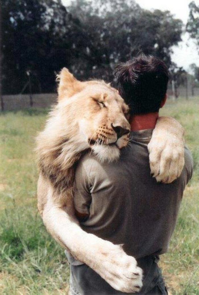 Une photo animaux mignon photos d animaux mignons caresse lion
