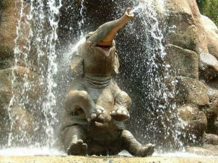 Fond d écran animaux mignon idée belle photo éléphante sous l'eau