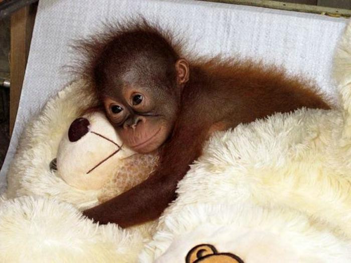 Les animaux les plus mignons photo animaux trop mignon gorille bébé
