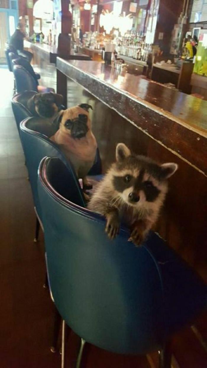 Image d animaux trop mignon adorables animaux dans le bar