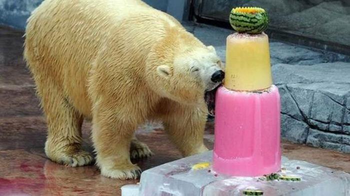 Gateau d anniversaire original pour ourse gateau d anniversaire