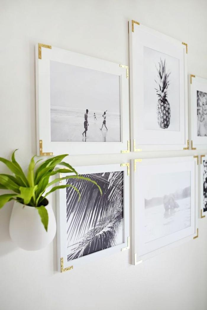 cadre rectangulaire, plante verte, suspension plante, murs blancs, cadres blancs, photos blanc et noir