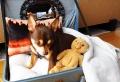 Panier pour chien – Tuto et idées pour le confort de toutou