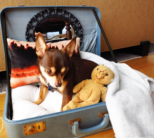 comment fabriquer un panier pour chien chiot avec valise