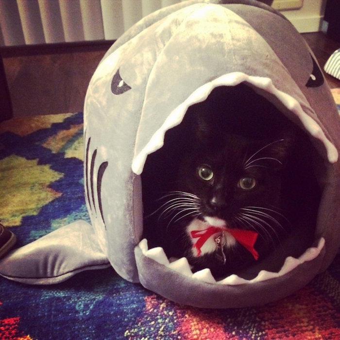 igloo chat corbeille pour chats originale requin cabane pour chaton