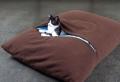 Un coussin chat tout doux, pour lui et pour vous